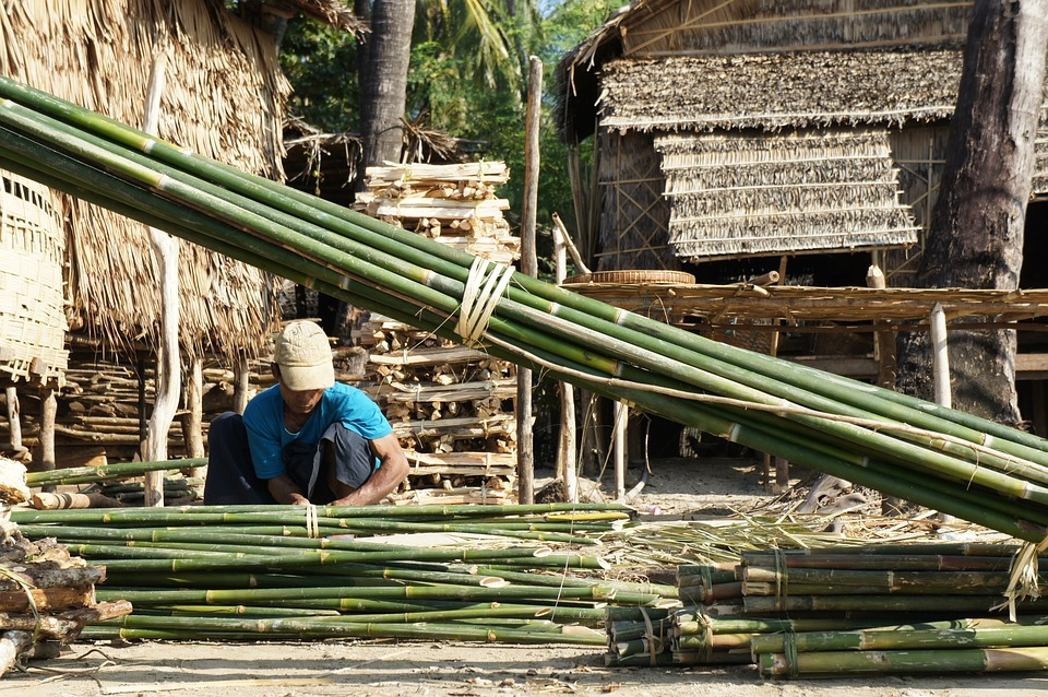 Malaysian Company to Invest in Bamboo Sector
