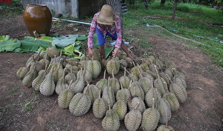 Durian farmers urged to form cooperative