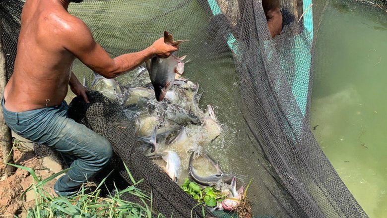 Fishery exports from the Kingdom increase from 2019