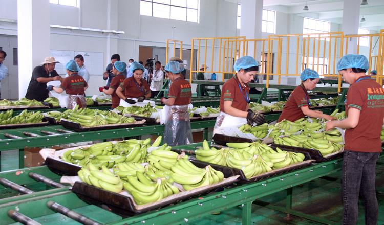 Banana exports drop amid pandemic