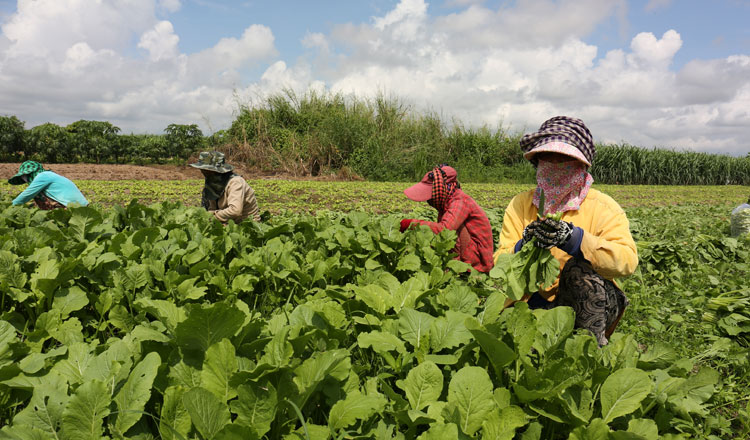 Kratie urges for increase in agricultural production
