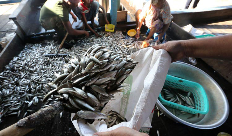First half-year figures see rise in fish breeding
