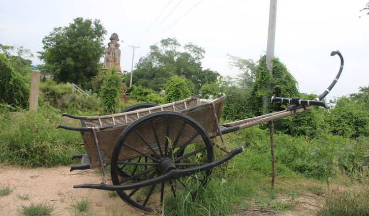 The ox-cart, Cambodia's ancient Mercedes-Benz