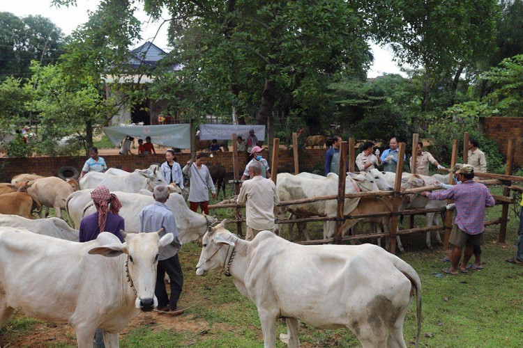 China Provides 200,000 Doses Of Vaccines For Cambodian Cattle