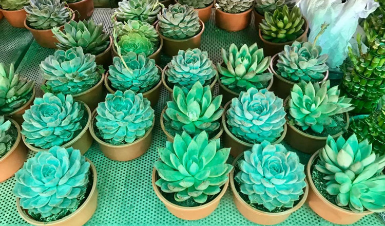 Blossoming house plant market sees a flowering in growth