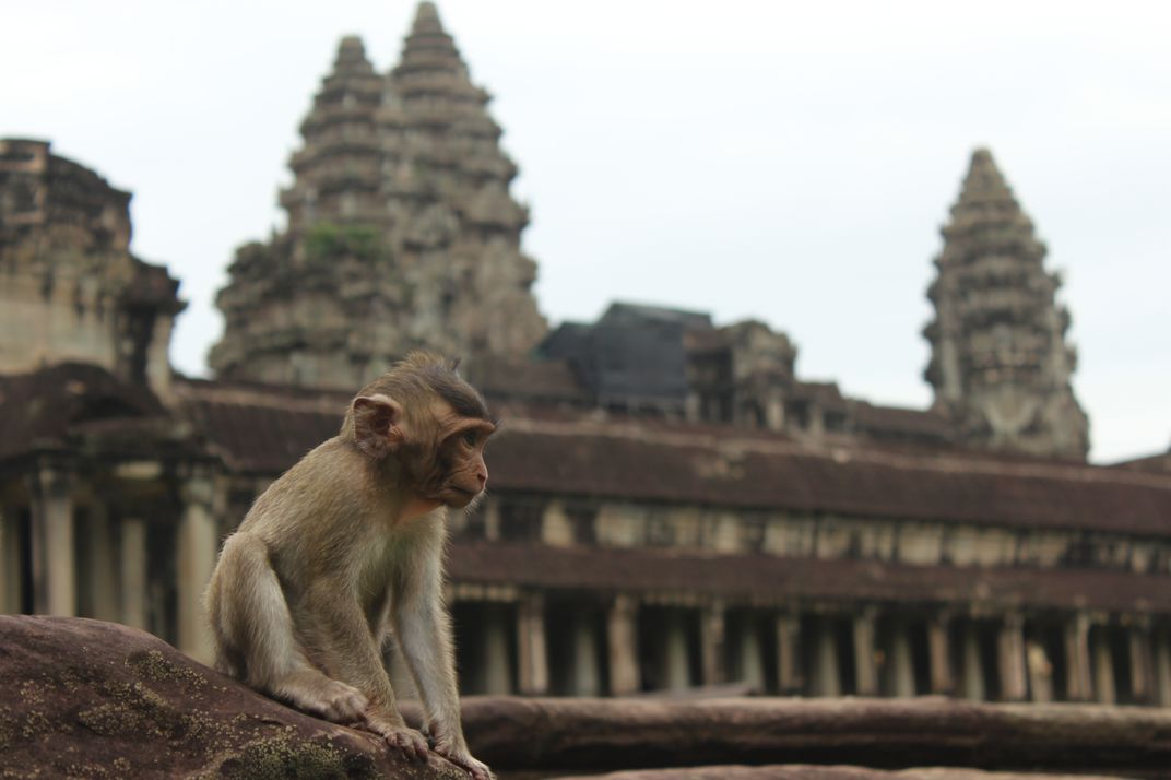 Wild animals allowed to live 'naturally' at Angkor