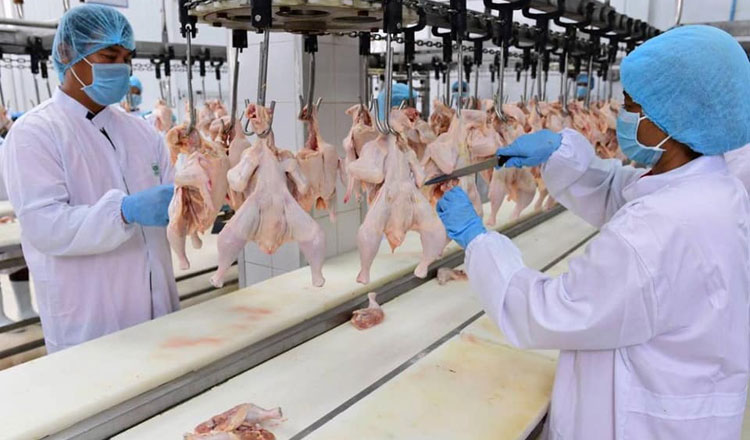 CP Cambodia invests $67M in animal food production