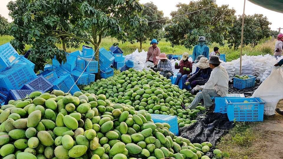 Over 770,000 tonnes of agricultural products exported to Thailand in Q1
