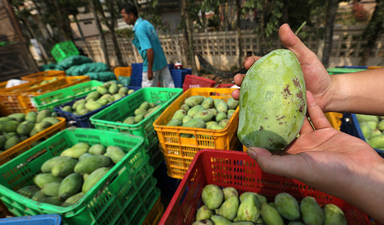Mangoes receive official approval for export to China