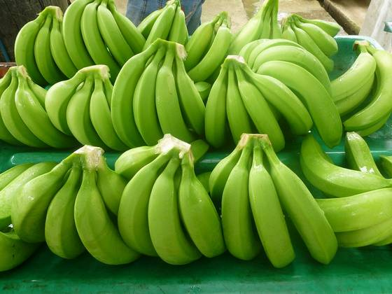 Nearly 350k Tons of Bananas Exported in First Nine Months