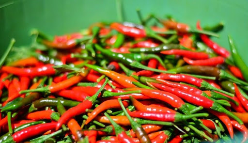 Fresh Chilli Exports Increase about 95 Percent in The First Five Month