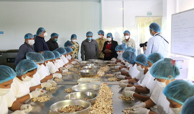 Cambodia set to increase exports of processed cashew nuts to Europe, USA, Canada, China and Australia markets