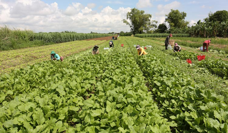 Cambodia Supports Sustainable Agriculture Production