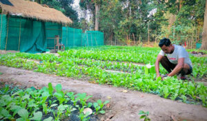 Japanese offer tech expertise to help farmers