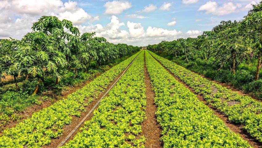 South Korea Boosts Vegetable Production in Mondulkiri Province